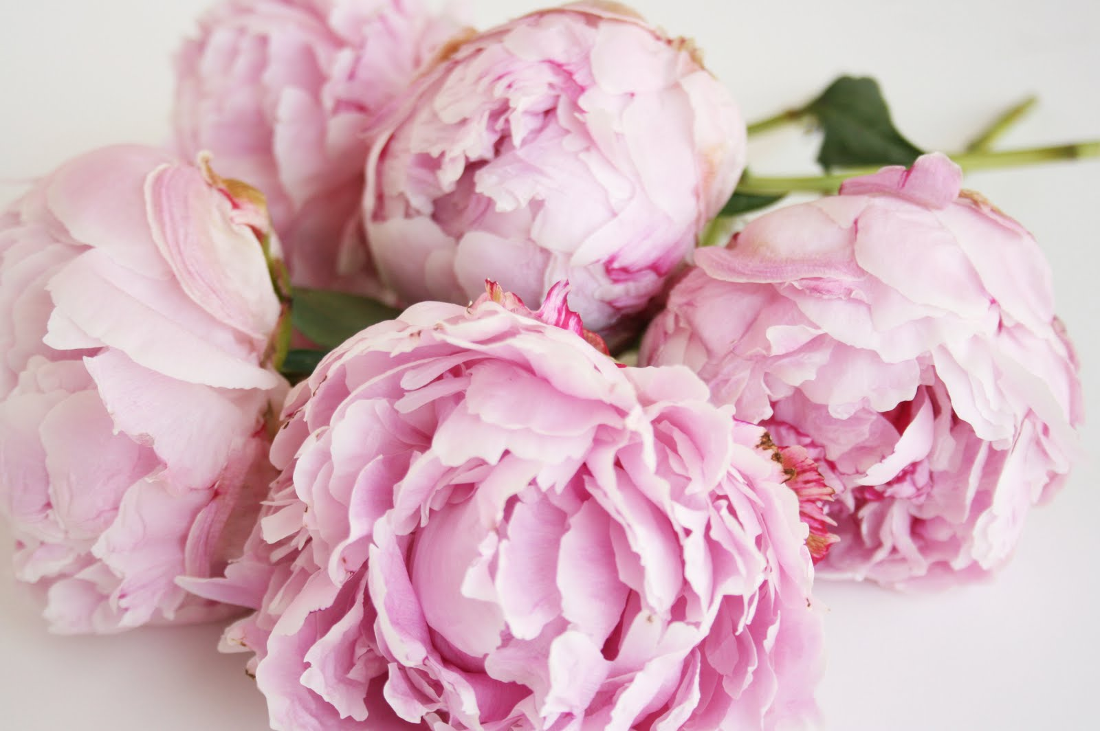 Peony Archives Trapp and pany